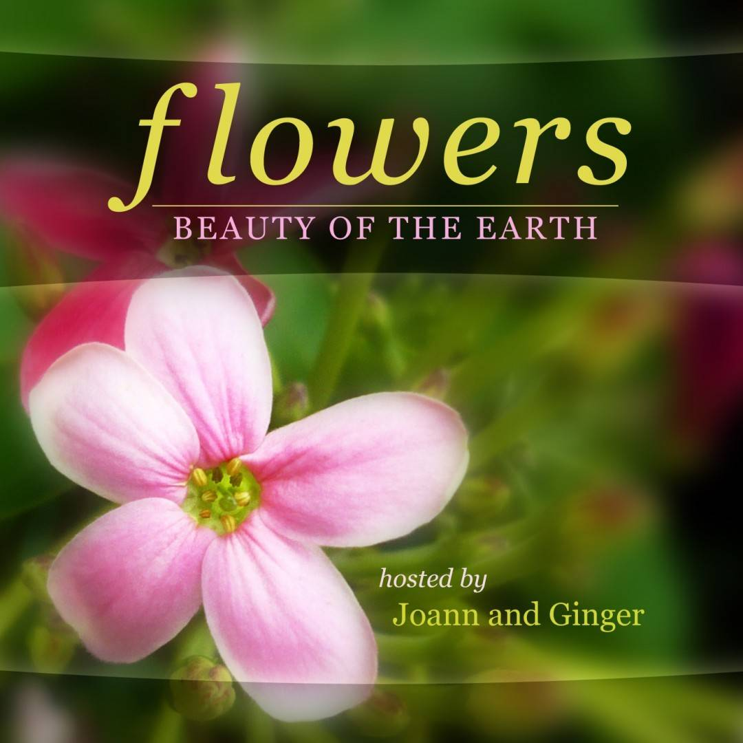 Flowers Beauty Earth Album Art