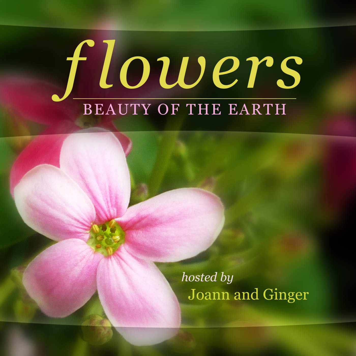 Flowers Beauty Earth